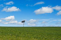 Single tree at top of pasture field under blue sky